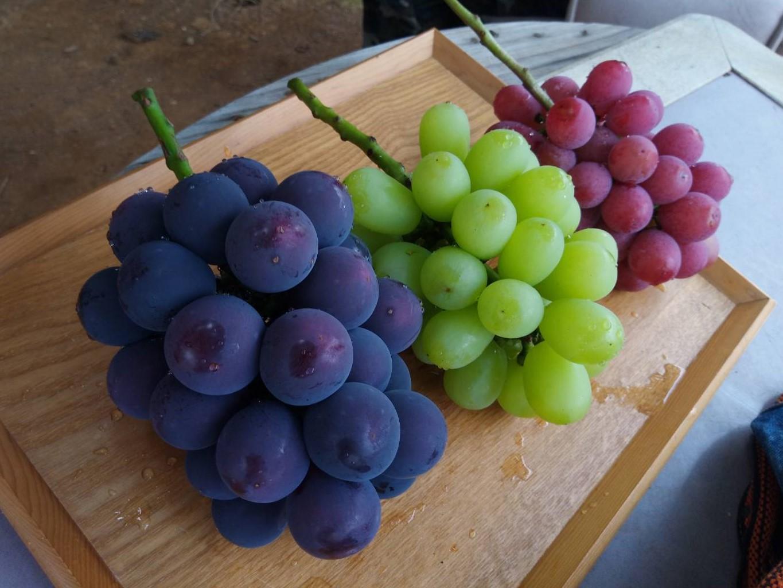 ぶどうオタクに聞く!好きなブドウ品種を探せ!