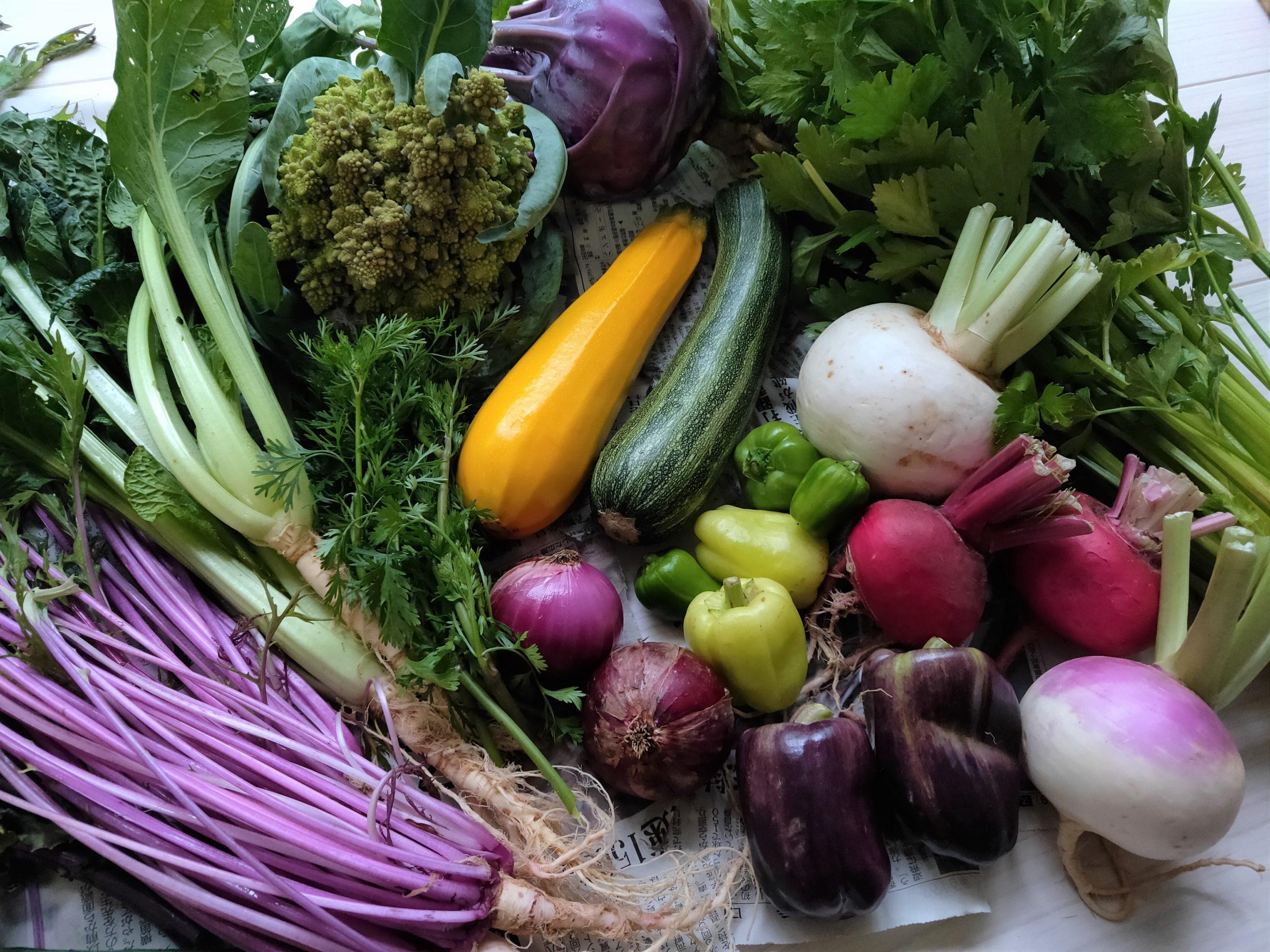 おまかせ野菜セットを選ぶ際の手引き